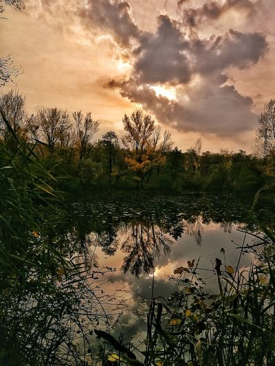 Noghere Muggialive Reflection Tree Silhouette Lake Cloud - Sky Beauty In Nature Day No People Water Sky Nature Outdoors Sunset Snapseed Huawei P9. Trieste, Italy Huaweip9photos EyeEm Selects Picoftheday Triestephotodays Tranquility Horizon Over Water Muggia