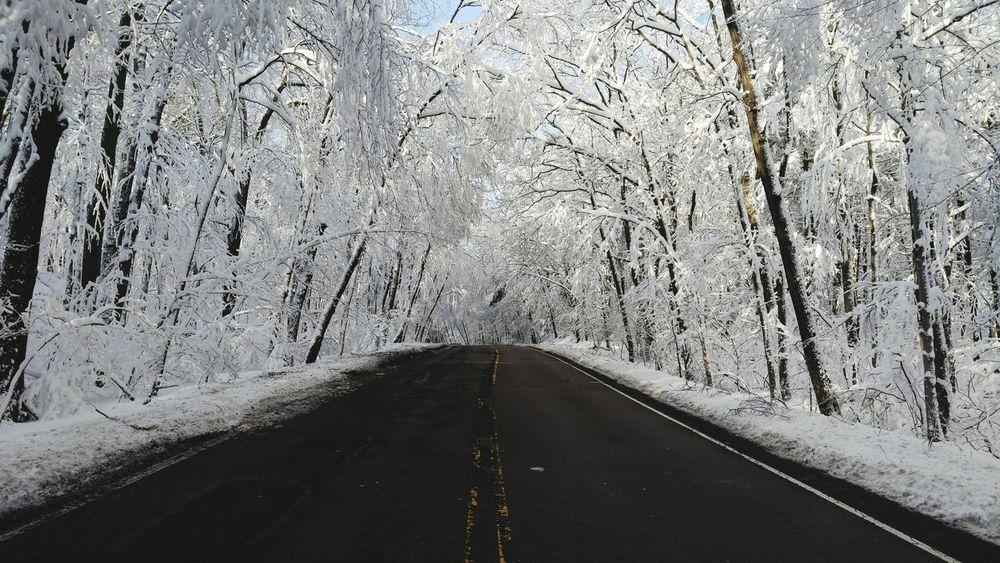 Calmafterthestorm Hiking Snow Brisk Walk Nature Reserve