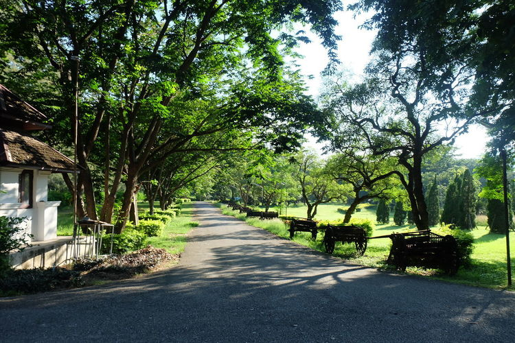 Plant Tree The Way Forward Nature Direction Growth Transportation No People Beauty In Nature Sunlight Day Road Outdoors Green Color Tranquility Footpath City Park Shadow Bench Diminishing Perspective Long