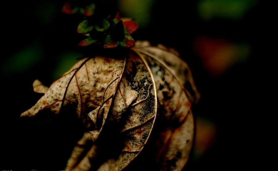 Autumn Beauty In Nature Close-up Day Dry Flower Flower Head Fragility Ireland Leaf Nature No People Outdoors
