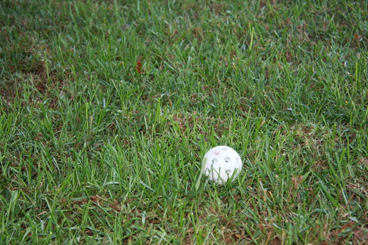 Grass Plant Green Color Land Field Nature No People Day Growth One Animal Pets Animal Vertebrate White Color High Angle View Animal Themes Mammal Domestic Outdoors Domestic Animals Wiffleball Baseball