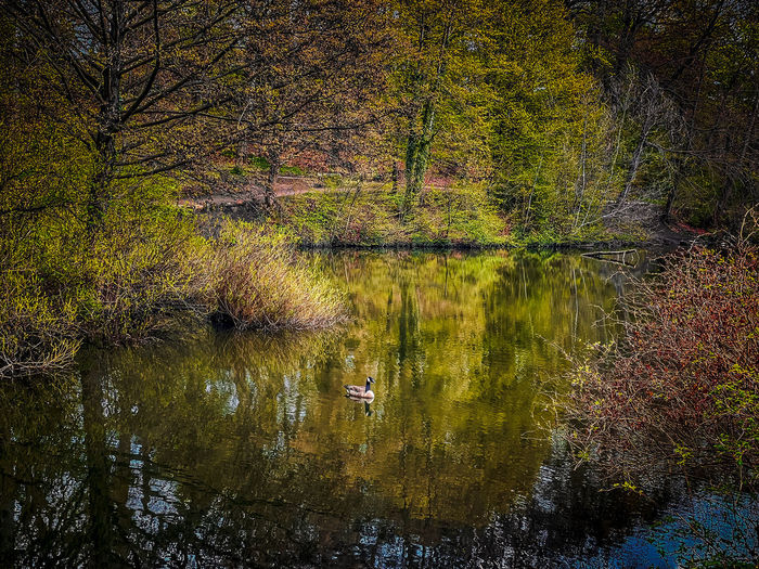 Reflection of trees on lake in forest