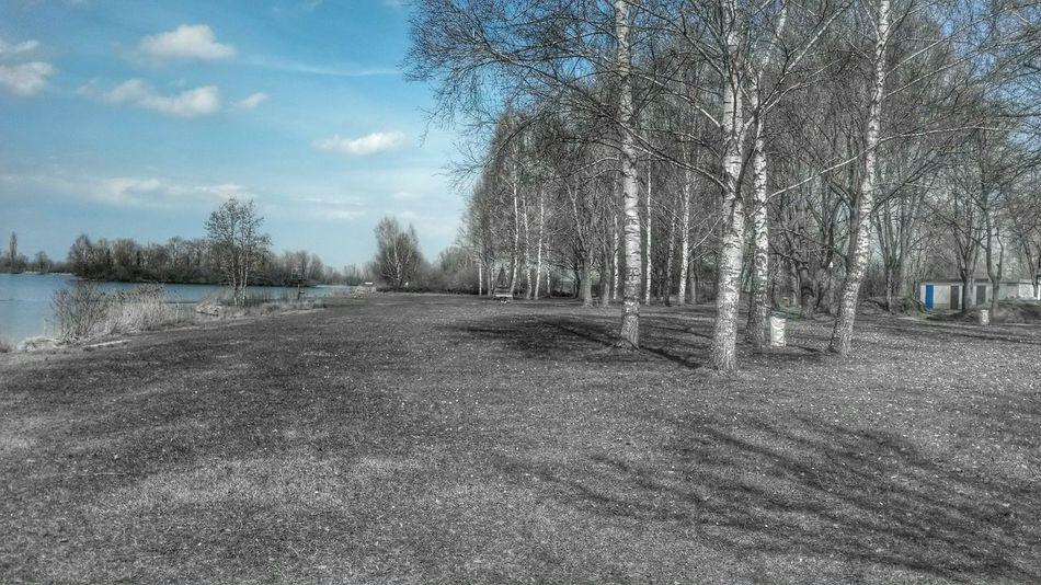 Enjoying Life Filter Good Morning Lake Relaxing Birken Spring Frühling am See