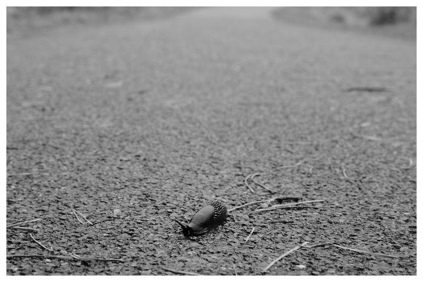 Slug Nature Animals Blackandwhite Blackandwhite Photography Blackandwhitephotography Black And White Black And White Photography EyeEm Best Shots - Black + White