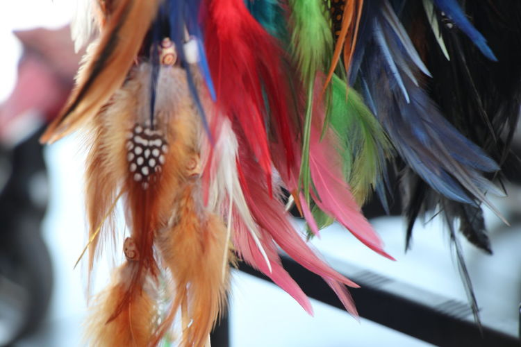 Animal Themes Bird Close-up Day Fathers Feather  Hanging Multi Colored No People Outdoors