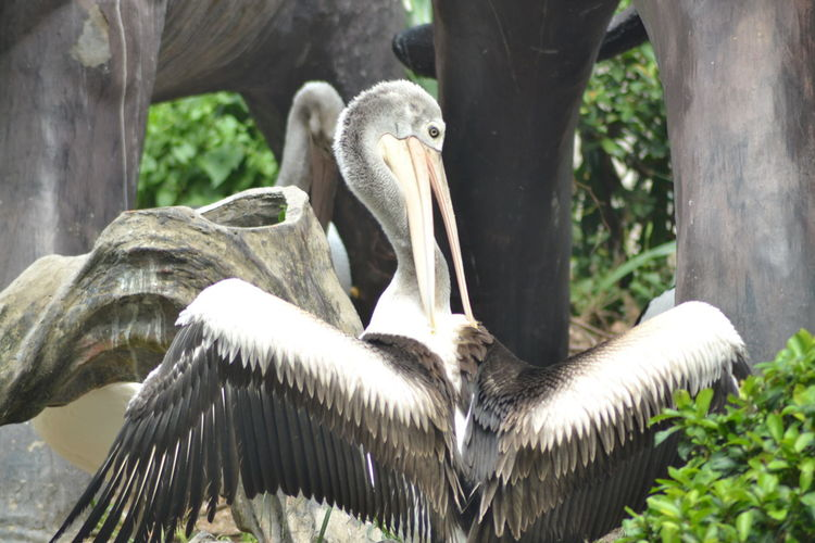 Close-up of pelican perching on tree