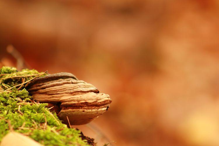 Mushroom Fallen