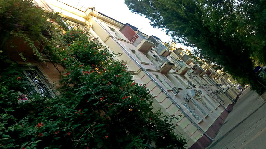 Tree Architecture Built Structure Building Exterior Growth No People Green Color Nature City Outdoors Plant Day Rostov-on-Don Ростов-на-Дону дворик арка Arch архитектура