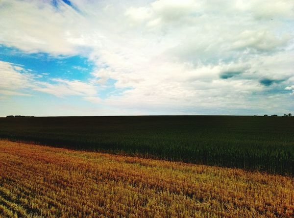 Agriculture Cloud - Sky Field Growth Nature Sky Minimalistic Landscape Rural Scene No People Tranquility Freshness Cereal Plant Outdoors Crop  Scenics Beauty In Nature Day Geometry Everywhere