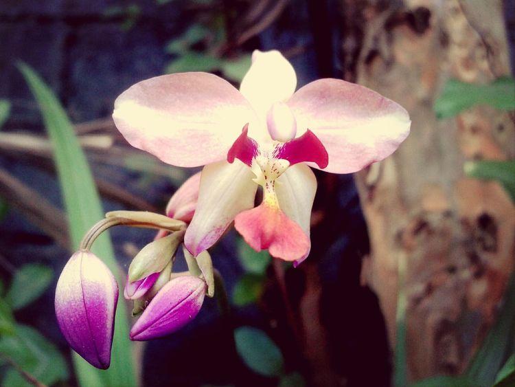 Flowers Eyeem Philippines Mobile Photography Closeup