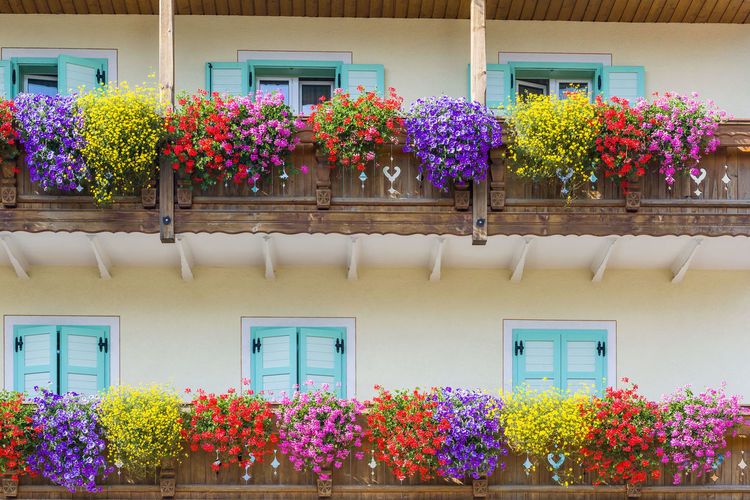 Low angle view of flowers on balcony