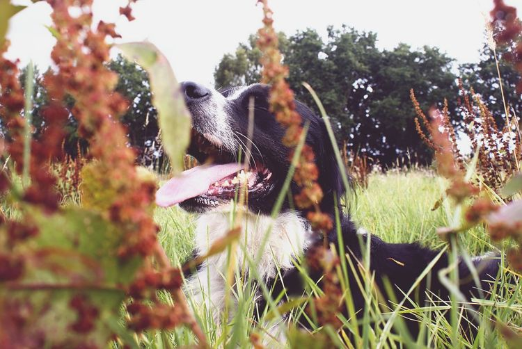 Close-up of dog seen through plants