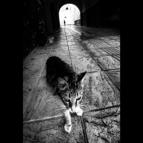 The street cat Streetphotography Sokakfotografciligi Bw Bnw Street Humaningeometry The Art Of Street Photography Pets Feline Domestic Cat Stray Animal Cat Ginger Cat Domestic Animals