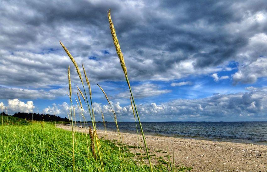 On the Beach. Enjoying Nature Denmark Tadaa Community EyeEm