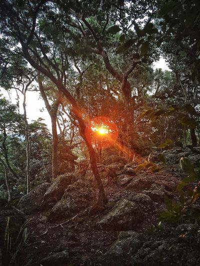 The Earth doesn't have eyes, yet we can see through her Hill Sunset Outdoors Tranquil Scene Tranquility Nature Beauty In Nature No People EyeEm Nature Lovers Sun The Great Outdoors - 2017 EyeEm Awards BYOPaper! Perspectives On Nature