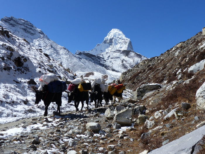 Expedition Himalayas Nepal Sherpa Travel Trekking Yak Adventure Base Camp Beauty In Nature Climbing Climbing Equipment Everest Extrem Sport Extrem Sports Hiking Himalaya Mountain Mountain Peak Mountain Range Mountaneering Nature Outdoor Scenics - Nature Snow