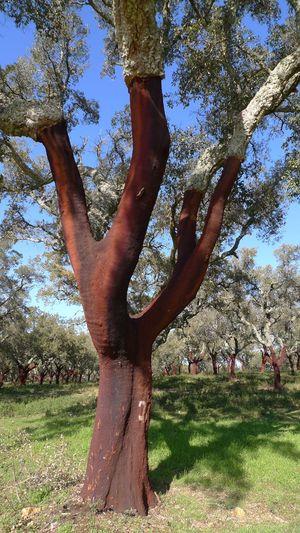 Tree trunk on grassy field in park
