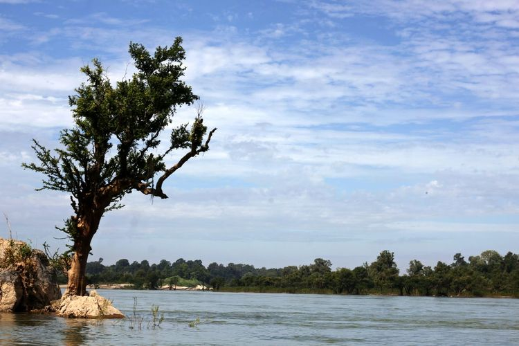 Beach Beauty In Nature Cloud - Sky Day Horizon Over Water Idyllic Irrawaddy Irrawaddy Dolphine River Irrawaddy River IrrawaddyDelta Landscape Nature No People Outdoors Scenics Sea Sky Tranquil Scene Tranquility Tree Water