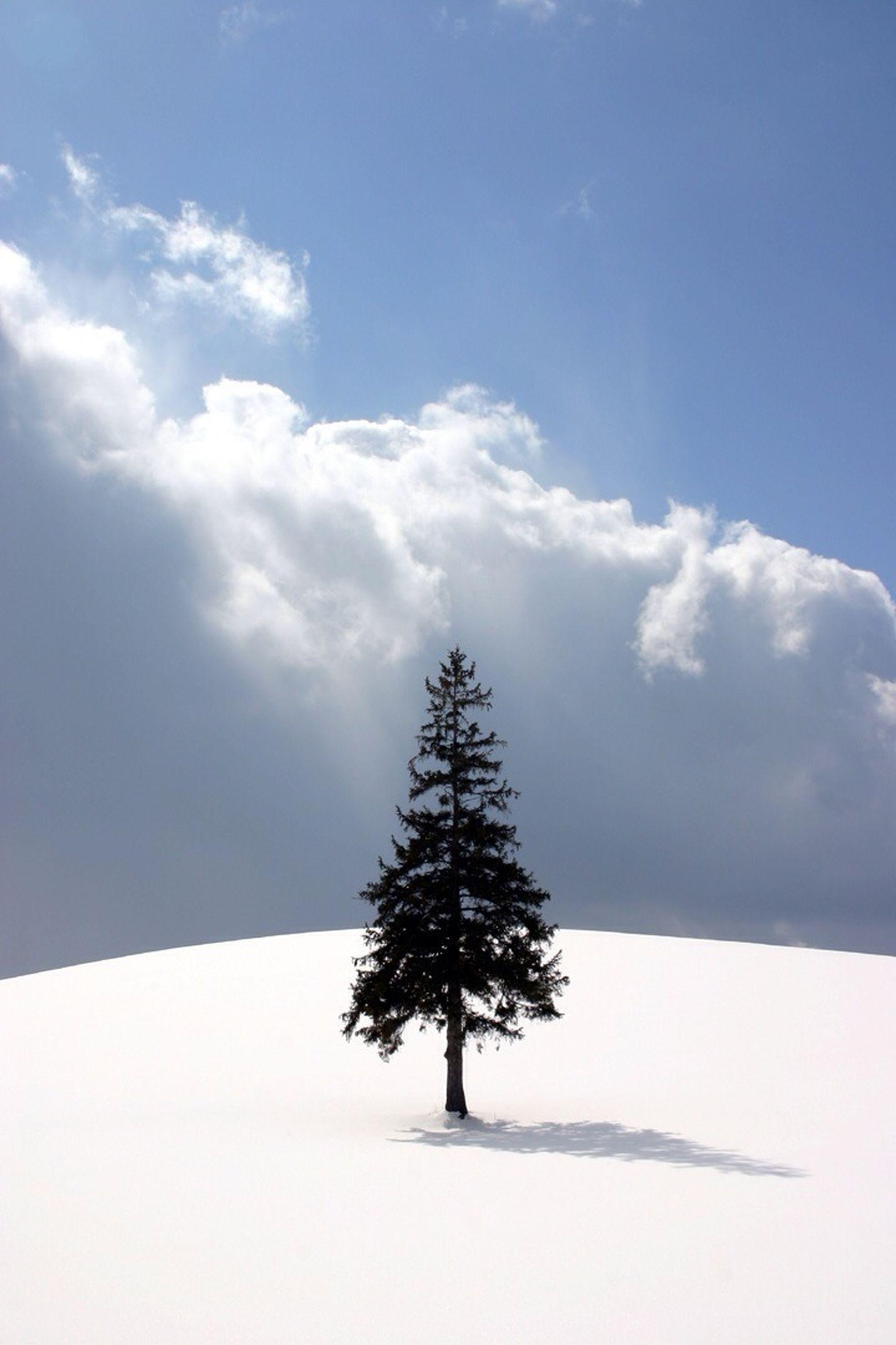 snow, winter, cold temperature, tranquility, tree, tranquil scene, sky, beauty in nature, scenics, nature, landscape, weather, season, cloud - sky, covering, white color, field, non-urban scene, cloud, sunlight