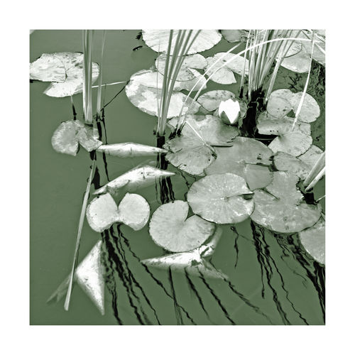 Lilly Pads @ DeYoung Rendered 3 Golden Gate Park San Francisco Ca Museum Fountain Artistic Edit Textured  Effects Burlap Green Tint Monotone Monochrome Effects & Filters Aquactic Pond Lilly Pads Lillies Grasses