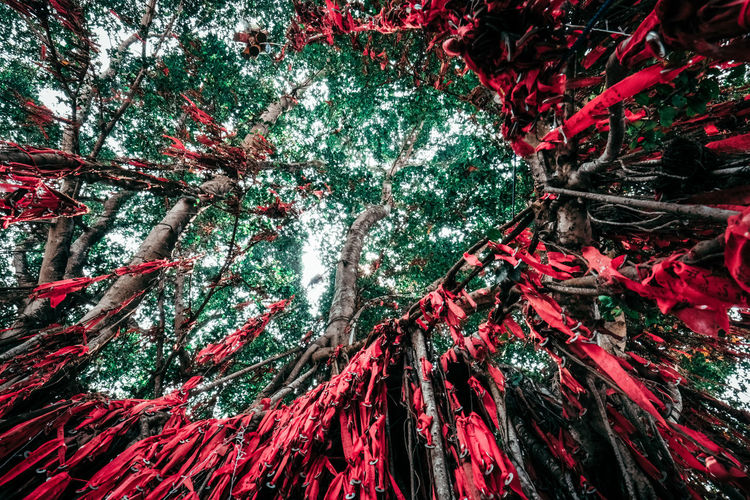 Low Angle View Of Red Fabric Hanging On Tree