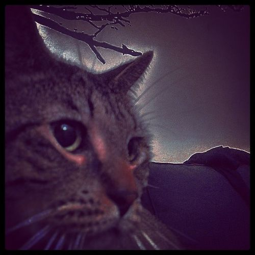 Cats Catsofinstagram Catsofnyc Classycats dontfalldownnow