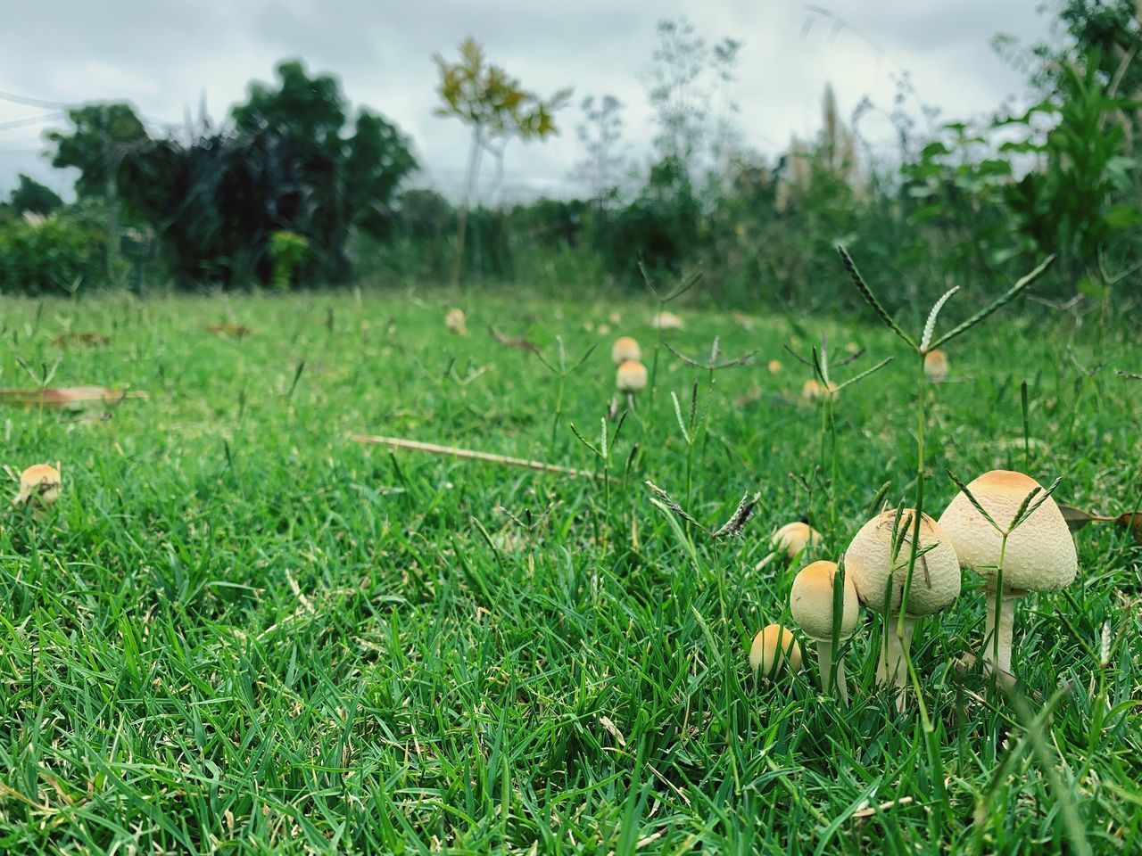 plant, field, land, green color, growth, nature, grass, no people, day, focus on foreground, food, fungus, mushroom, outdoors, beauty in nature, close-up, vegetable, toadstool, food and drink, tree