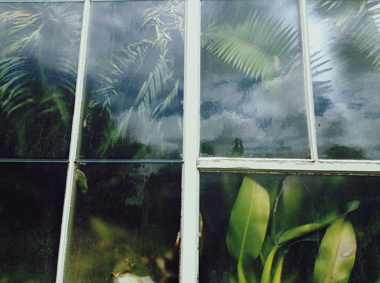 Low angle view of trees and plants growing in greenhouse