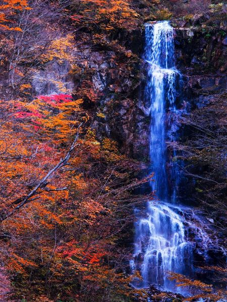 Waterfall Motion Long Exposure Water Flowing Water Nature Beauty In Nature Scenics Tranquil Scene No People Day Outdoors Forest Power In Nature Tranquility Travel Destinations Tree