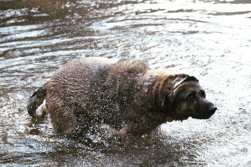 Drops Of Water Nature Animal Pets Water Dog Swimming Shaking Close-up
