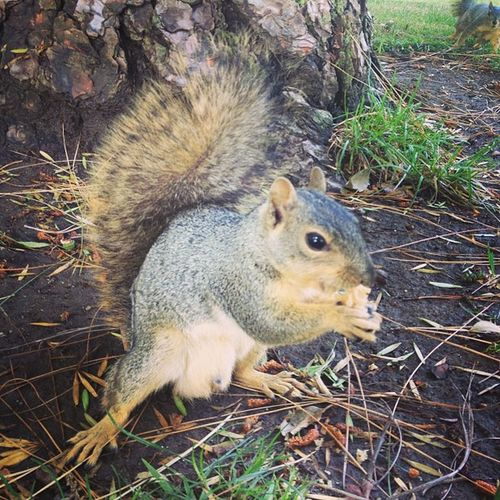 Gettin squirrelly at school ? Squirrel TheyreSoCute IGotScratched Ohwell