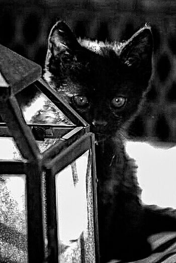 Kitty Kitten Photography B&wportrait For The Love Of Black And White B&w Photography Black And White EyeEm Best Shots - Black + White Eyeembestpics Eyeem Gallery B&w Photo