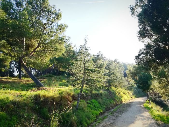 Nature Outdoors Landscape Beauty In Nature No People Trees Green Color Tranquil Scene Park Solitude Tranquility BCN Barcelona Barcelona