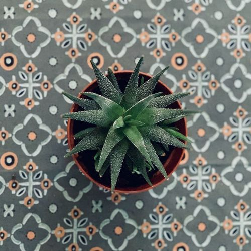 Geometric Patterns Cactus Pattern Green Color Plant Part Leaf High Angle View Indoors  No People Close-up Design Directly Above Potted Plant Tablecloth My Best Photo