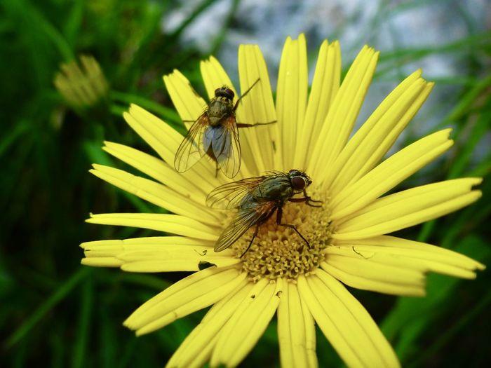 Fliegen Insect