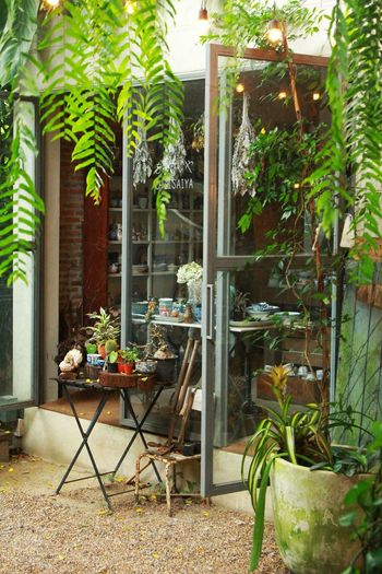 Tree Greenhouse Flower Leaf Chair Plant Open Door Potted Plant Plant Life Backyard Flower Pot Entryway