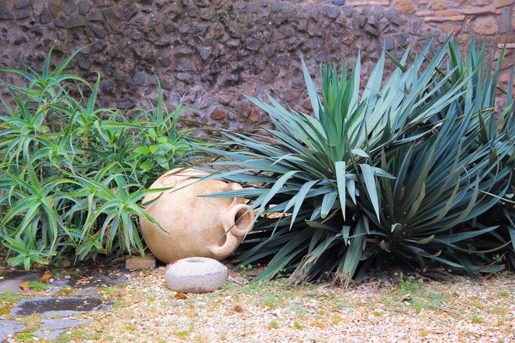 Italy Mediterranean  Meditation Tranquility Tranquil Scene No People Fine Art Photography Carafe Italian Carafe Plants Decoration Decorative Italian Style Italian Art Beauty On Our Doorstep Better Gardens Landscaping Design Summer Italian Feeling Yucca Showcase July Hidden Gems  Adapted To The City