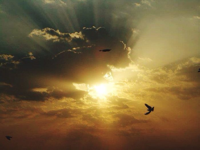 Morning sunshine! Captured. In every darkness ,there's always llight to guide, don't lose your hope keep going Flying Freedom Spread Wings Beauty In Nature