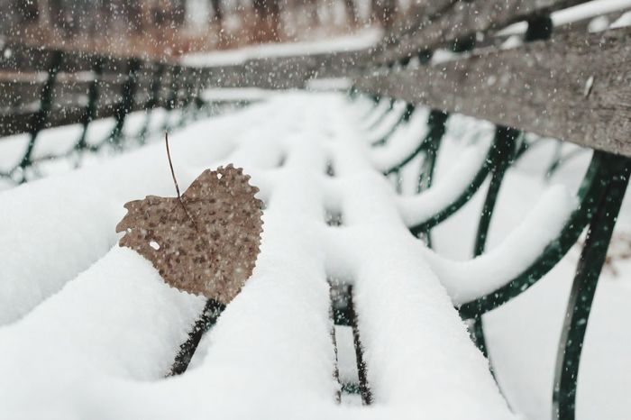 We need more love in 2018. Pass it on ❤ Happy New Year's to everyone. Heart Leaf Love Benches Snow Winter Cold Temperature Snowing Outdoors Day Nature Snowflake