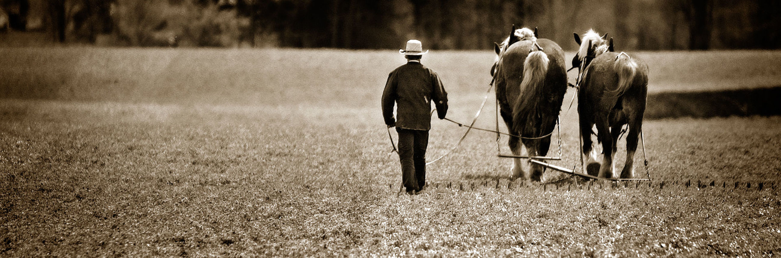 men, rear view, standing, full length, field, lifestyles, walking, leisure activity, person, grass, horse, togetherness, casual clothing, outdoors, domestic animals, landscape, day