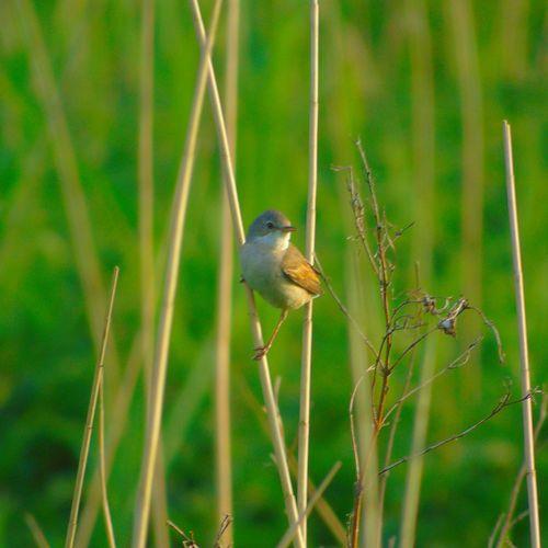 Bird Beauty In