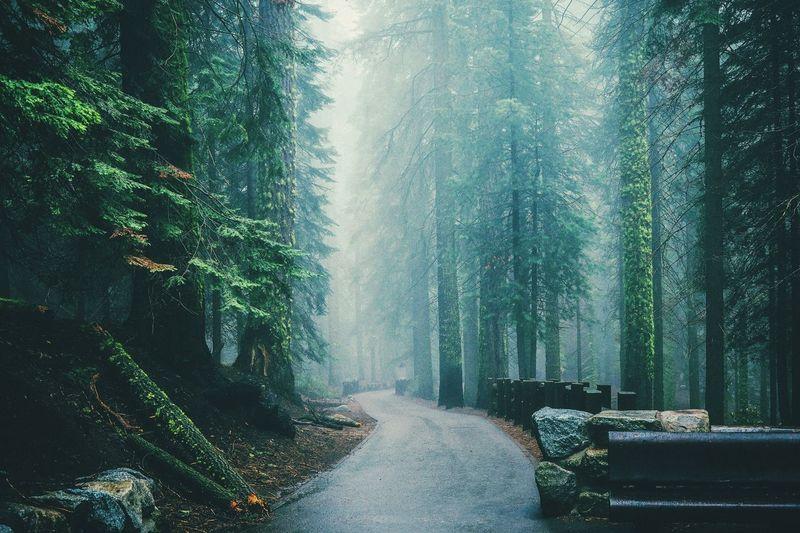 View Of Narrow Road Along Trees