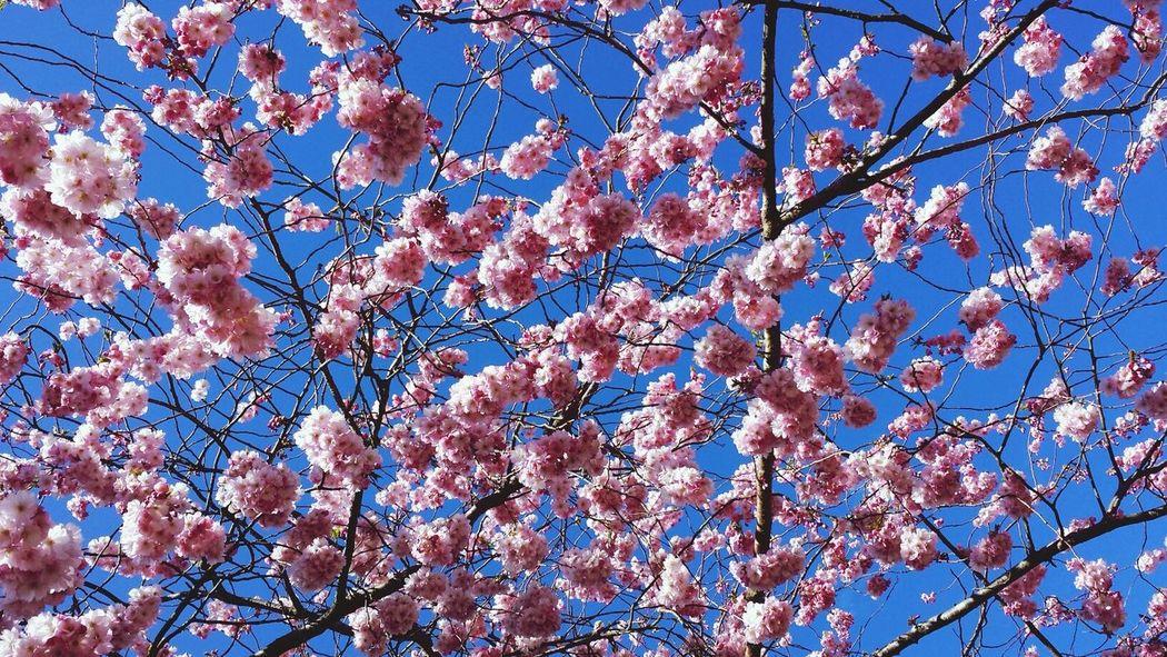 Spring time Flowers Pink Spring