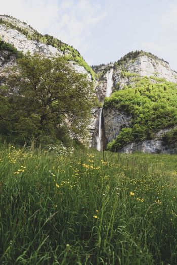 idyll Spring Hiking Walensee Green Waterfall Switzerland Plant Green Color Grass Growth Nature Beauty In Nature No People Tranquil Scene Scenics - Nature Idyllic Landscape Environment Outdoors