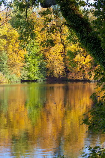 Autumn Mood Tree Lake Plant Water Reflection Autumn Beauty In Nature Tranquility Scenics - Nature Nature No People Tranquil Scene Growth Day Forest Change Land Outdoors Non-urban Scene Eutin See Mirriorshot Mirrior Autumn