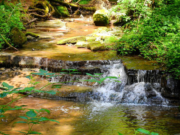 Water Nature Outdoors Day No People Beauty In Nature Motion Green Color Tree Forest Landscape Travel Destinations Nikon Photography Long Exposure Tranquility Waterfall Beauty In Nature Nature Blurred Motion