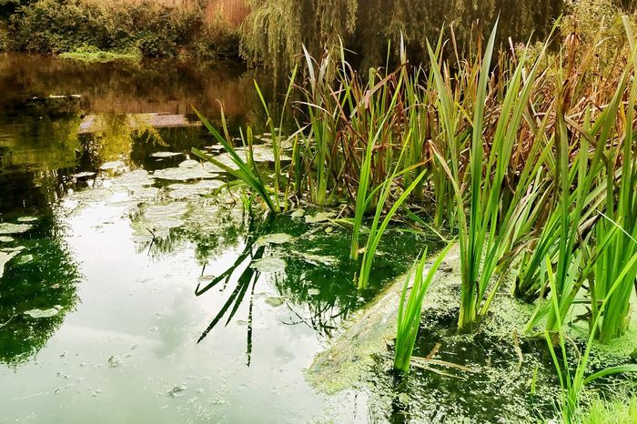 Water Nature Reflection Outdoors Lake Grass Tranquility Growth No People Plant Beauty In Nature