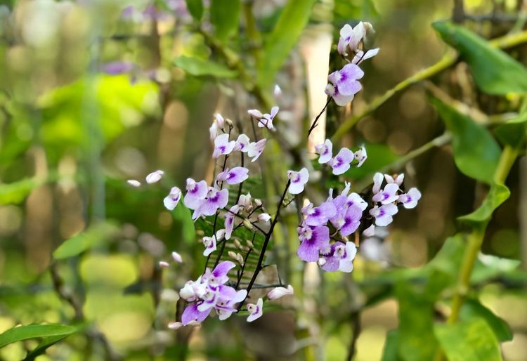 Purple orchids in the garden day light Flowering Plant Flower Freshness Plant Fragility Vulnerability  Beauty In Nature Growth Flower Head Inflorescence Focus On Foreground No People Close-up Botany Blossom Petal Purple Day Nature Springtime