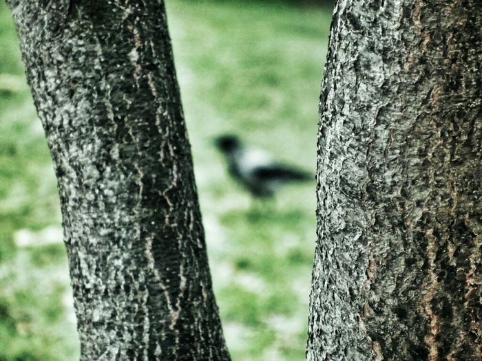 Sunset Garden Air Animal Bird Green Tree Shadow Amazing Park Black Crow Karga