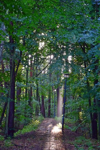 Bogensee Evening Light Beauty In Nature Day Evening Sun Evening Walk Forest Growth Nature No People Outdoors Scenics Tranquil Scene Tranquility Tree Tree Trunk